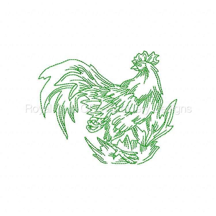 rooster_15.jpg