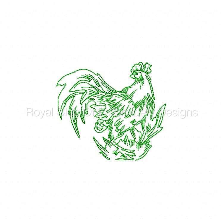 rooster_16.jpg
