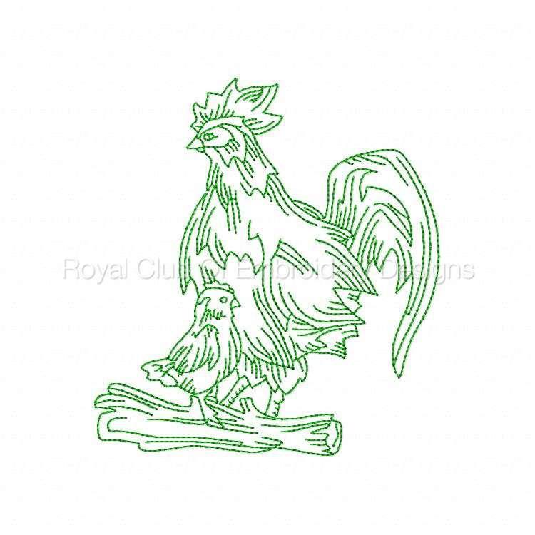rooster_17.jpg