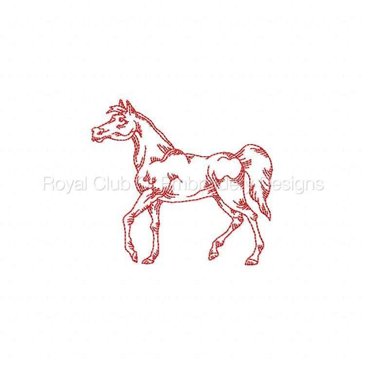 rwhorses_07.jpg