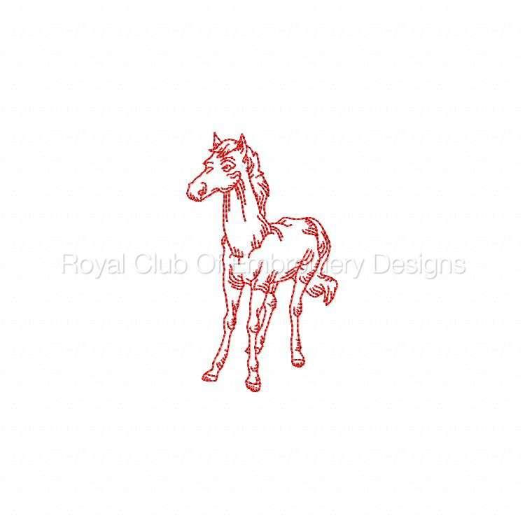 rwhorses_09.jpg