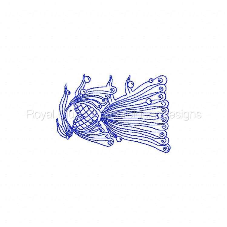 rwlacefish_01.jpg