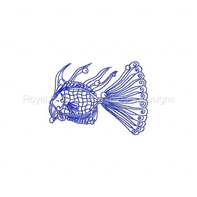 rwlacefish_04.jpg