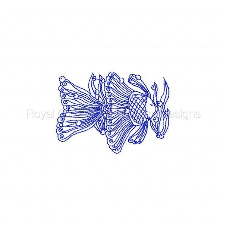 rwlacefish_07.jpg