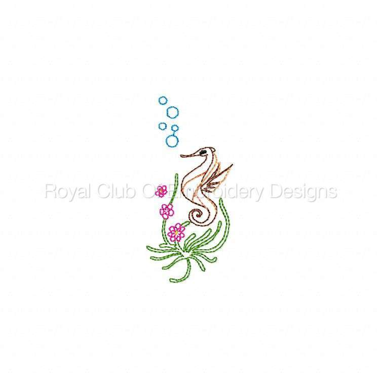 seahorses_07.jpg