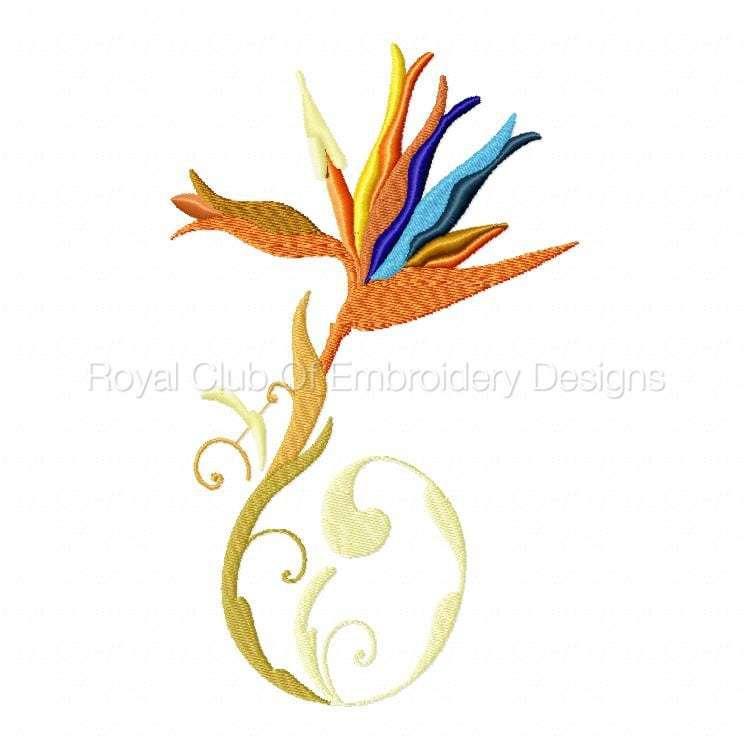 stylisedbirdsofparadise_02.jpg