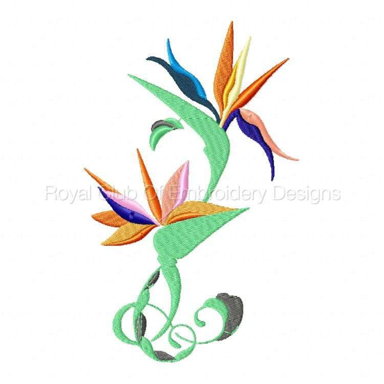 stylisedbirdsofparadise_05.jpg