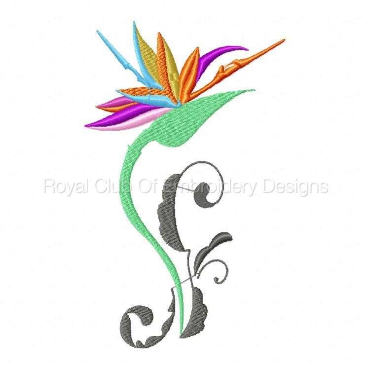 stylisedbirdsofparadise_06.jpg