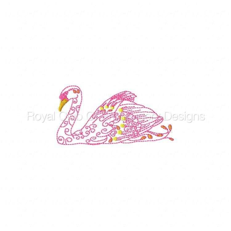swans_07.jpg
