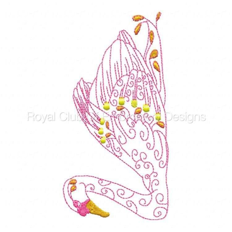 swans_08.jpg
