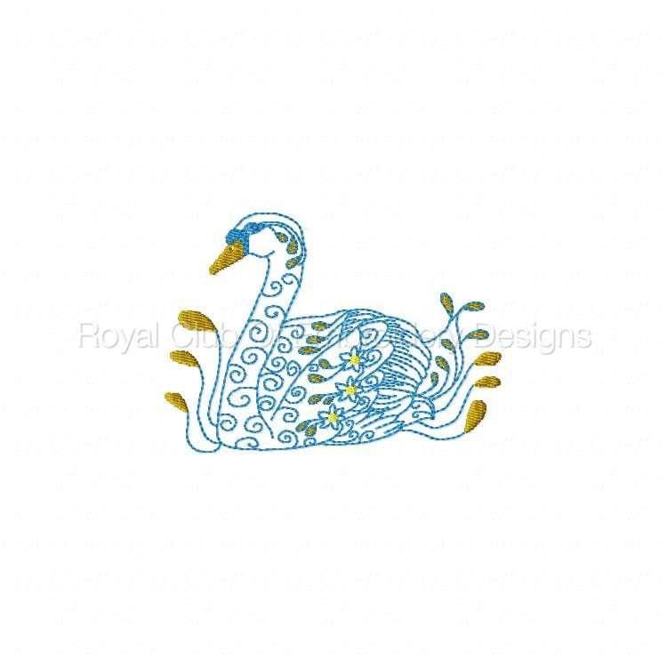 swans_19.jpg