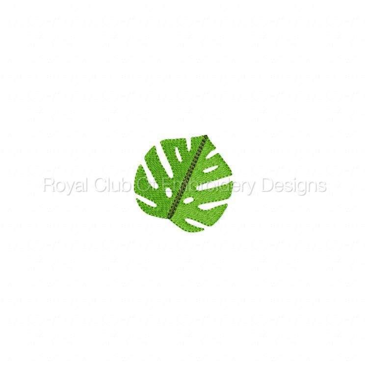 tropicaldesigns_08.jpg